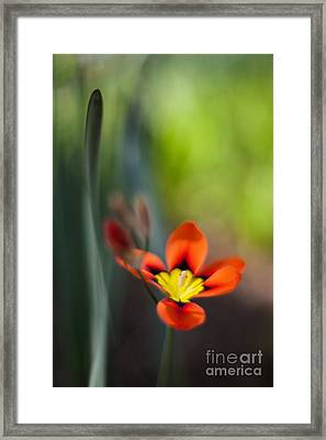 Flora Counterpoint Framed Print by Mike Reid