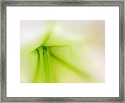 Floral Abstract Framed Print by Juergen Roth