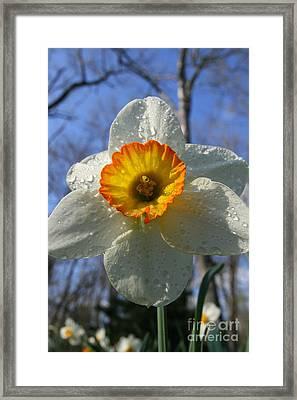 Floral Dew  Framed Print by Neal  Eslinger