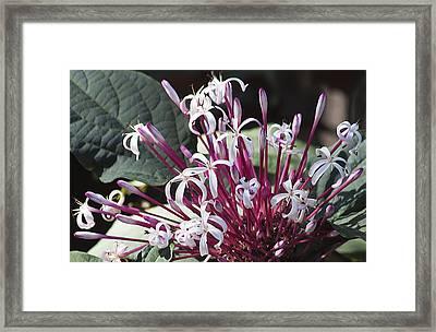 Floral Fireworks Framed Print by Kenneth Albin