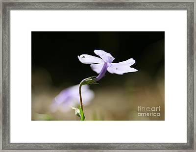 Floral Heights Framed Print by Neal  Eslinger