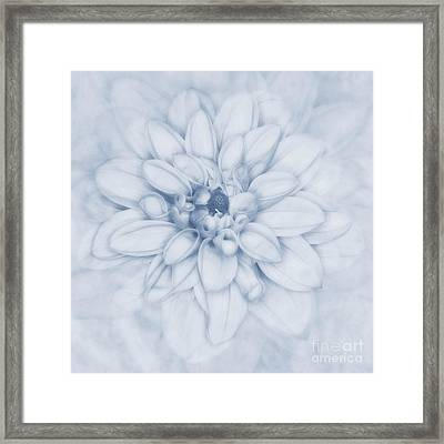 Floral Layers Cyanotype Framed Print by John Edwards