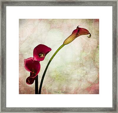 Floral  Framed Print by Mark Ashkenazi