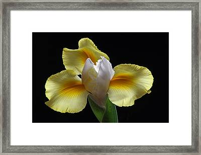 Floral Roar Framed Print by Juergen Roth