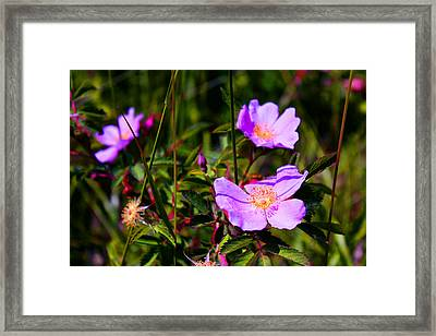 Floral Saturation Framed Print by Sheryl Burns