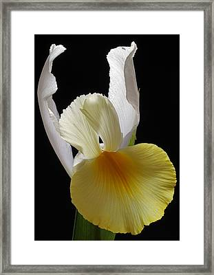 Floral Single Lady Framed Print by Juergen Roth