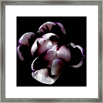 Floral Symmetry Framed Print by Rona Black