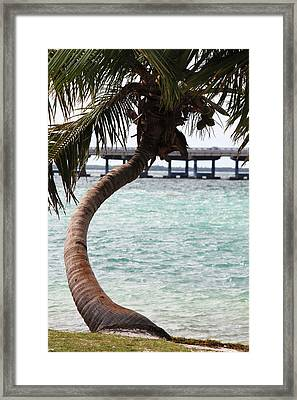 Florida Curve Framed Print by Ella Char