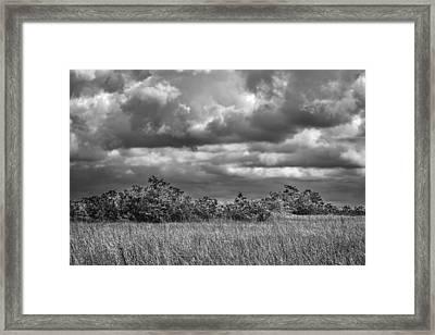 Florida Everglades 0184bw Framed Print by Rudy Umans