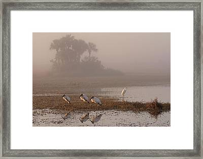 Florida Everglades Wood Storks Framed Print by Juergen Roth