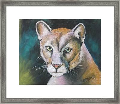 Florida Panther Framed Print by Melinda Saminski
