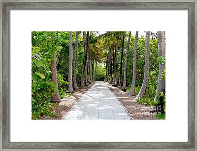 Florida Walkway Framed Print by Carey Chen