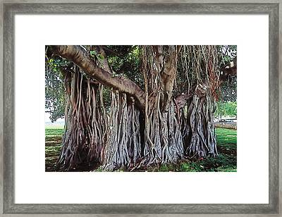 Flow Framed Print by Terry Reynoldson