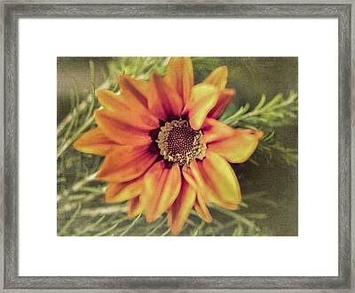 Flower Beauty I Framed Print by Marco Oliveira