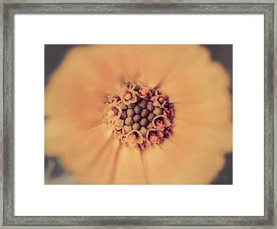 Flower Beauty IIi Framed Print by Marco Oliveira
