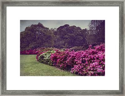 Flower Bush Framed Print by Svetlana Sewell