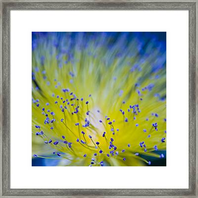 Flower Framed Print by Juli Scalzi