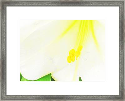 Flower -easter Lily Macro - Luther Fine Art Framed Print by Luther  Fine Art