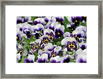 Flower Faces Framed Print by Frederico Borges