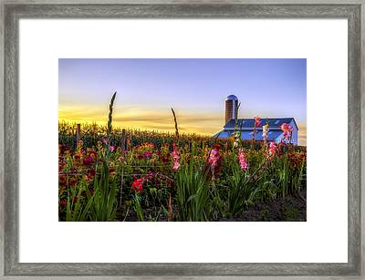 Flower Farm Framed Print by Mark Papke