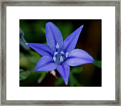 Flower From Paradise Lost Framed Print by Kim Pate