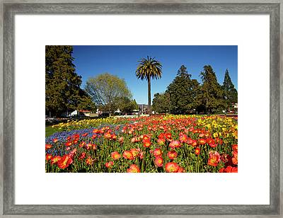 Flower Gardens And Palm Tree, Seymour Framed Print by David Wall