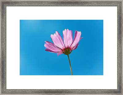 Flower - Growing Up In Philadelphia Framed Print by Mike Savad