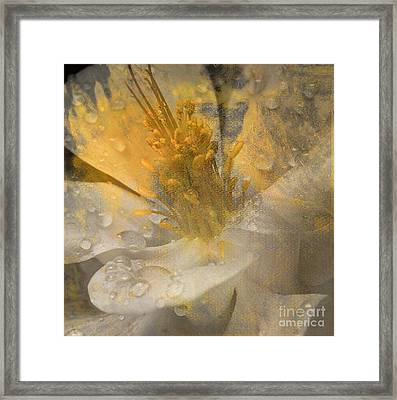 Flower IIi Framed Print by Yanni Theodorou