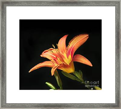 Flower Framed Print by Jelena Jovanovic