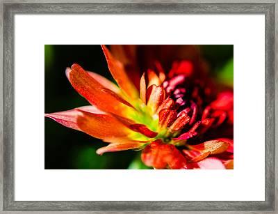 Flower Macro 9 Framed Print by Alan Marlowe