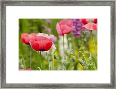 Flower Meadow Framed Print by Darren Wilkes