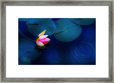 Flower On The Lily Framed Print by Cary Shapiro