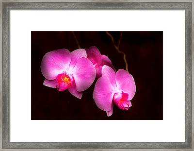 Flower - Orchid - Better In A Set Framed Print by Mike Savad