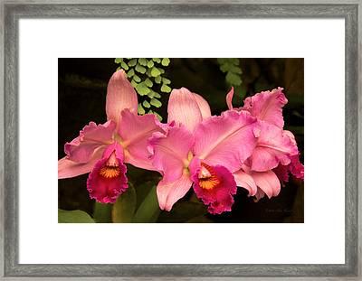Flower - Orchid -  Cattleya - Magenta Splendor Framed Print by Mike Savad