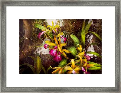 Flower - Orchid - Cattleya - There's Something About Orchids  Framed Print by Mike Savad