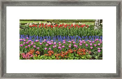 Flower Panorama Framed Print by Mark Kiver