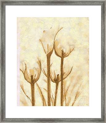 Flower Sketch Framed Print by Yanni Theodorou