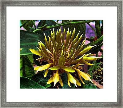 Flower - Sultry Dahlia - Luther Fine Art Framed Print by Luther Fine Art