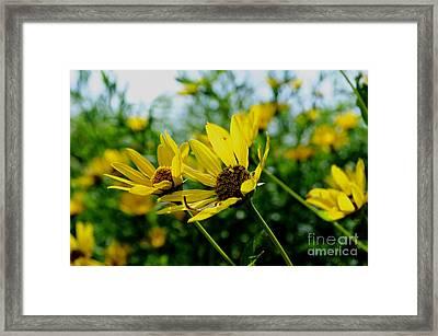 Flower - Sunning Sunflowers - Luther Fine Art Framed Print by Luther  Fine Art