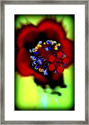 Flower With'in Framed Print by Kathy Sampson
