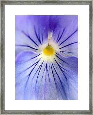 Flower Yolk Framed Print by Mike Podhorzer