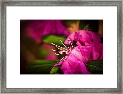 Flowering Bush Framed Print by Sennie Pierson