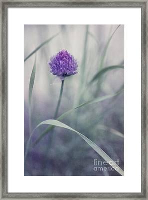 Flowering Chive Framed Print by Priska Wettstein