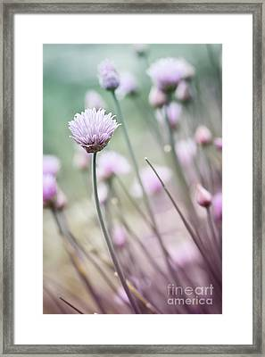 Flowering Chives I Framed Print by Elena Elisseeva