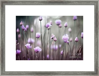 Flowering Chives Iv Framed Print by Elena Elisseeva
