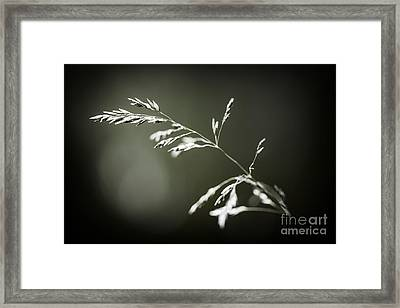 Flowering Grass Framed Print by Elena Elisseeva