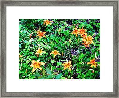 Flowers 2 Framed Print by Dietrich ralph  Katz