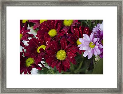 Flowers Framed Print by Ahmed Tarek Shaffik