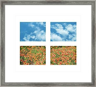 Flowers And Sky Framed Print by Ann Powell