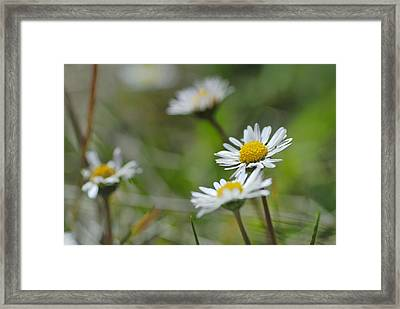 Flowers At The Mountains Framed Print by Guido Montanes Castillo